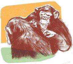 Primate Morality