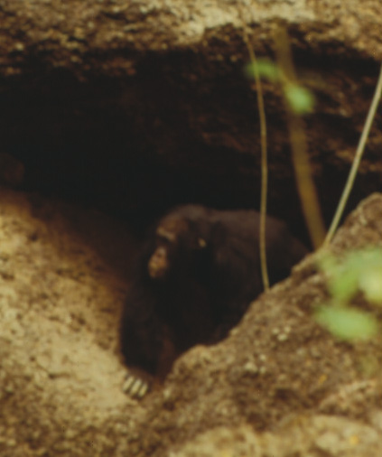Chimp in a cave
