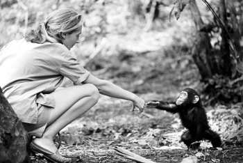 Jane Goodall and baby Flint