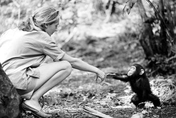 Jane Goodall and baby Flint