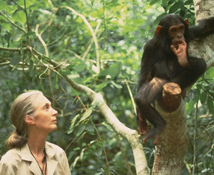 jane_goodall_and_chimp.jpg