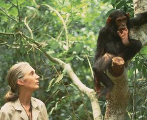 jane_goodall_and_chimp.jpg