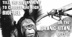Orangutans & Biofuel