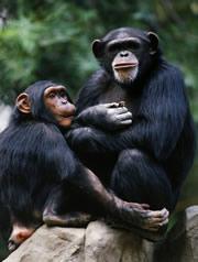 ChimpanzeeControl