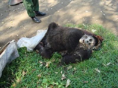 Dead Gorilla