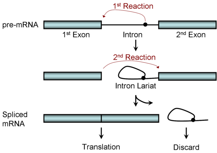 Splicing Process