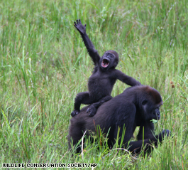 Gorilla Baby & Mom
