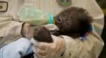 San Diego Zoo's New Baby Gorilla