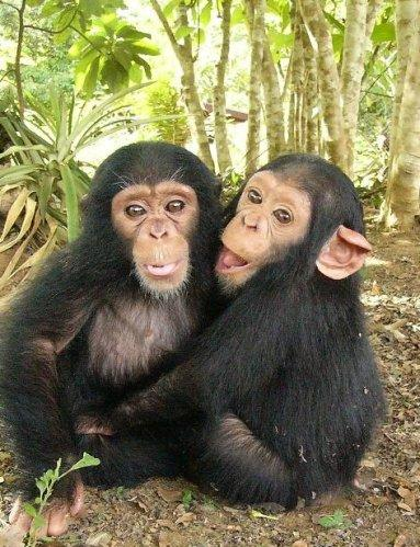 Two monkeys hugging drawing - photo#22