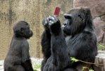 gorilla-nintendo-ds-1