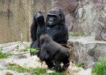 gorilla-nintendo-ds-2