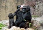 gorilla-nintendo-ds-3