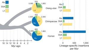 Comparison of Orangutan to Great Ape Alu sequences