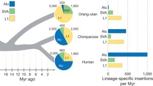 Comparison of Orangutan to Great Ape Alu sequences